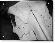Longhorn Skull Acrylic Print by Julie VanDore
