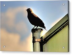 Look Out Post Acrylic Print by Barry R Jones Jr