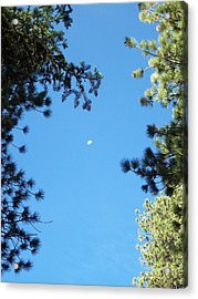Looking At The Moon Acrylic Print by Steve Huang