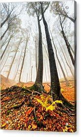 Lords Of The Forest Acrylic Print by Evgeni Dinev