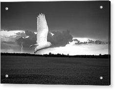 Lost Snowy Owl Acrylic Print by Joe Gee