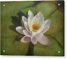 Lotus Blossom Textured Acrylic Print by Cindy Wright