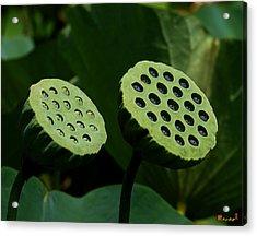 Lotus Capsules-sun Worshipers Dl052 Acrylic Print by Gerry Gantt