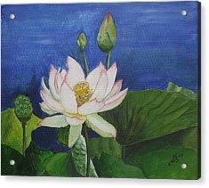 Lotus Flower Acrylic Print by Kim Selig