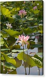Lotus Standing Tall Acrylic Print by Dina Calvarese