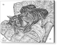 Lounge Lizards - Doberman Pinscher Dog Art Print Acrylic Print by Kelli Swan
