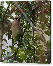 Love Holly Berries Acrylic Print by Rick Friedle