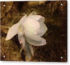 Love Letter Viii Cape Jasmine Gardenia Acrylic Print by Jai Johnson