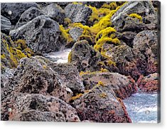 Low Tide Acrylic Print by Roger Mullenhour