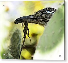 Lunch With A Roadrunner  Acrylic Print by Saija  Lehtonen