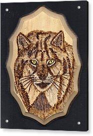 Lynx Acrylic Print by Clarence Butch Martin
