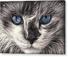 Mad Cat Acrylic Print by Elena Kolotusha