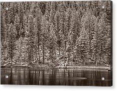 Madison River Yellowstone Bw Acrylic Print by Steve Gadomski