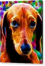 Magical Dachshund Acrylic Print by Paul Van Scott