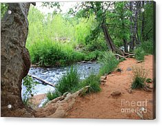Magical Trees At Red Rock Crossing Acrylic Print by Carol Groenen