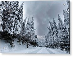 Magnificent Forest Acrylic Print by Evgeni Dinev