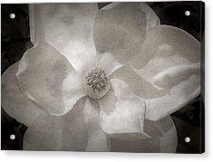 Magnolia 3 Acrylic Print by Rich Franco