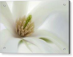 Magnolia Acrylic Print by Silke Magino