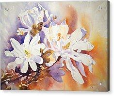 Magnolia Stellata Acrylic Print by Ruth Harris