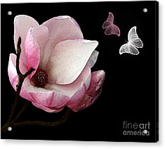 Magnolia With Butterflies Acrylic Print by Kaye Menner