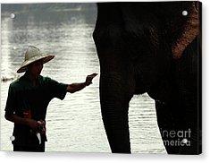 Mahut With Elephant Acrylic Print by Bob Christopher