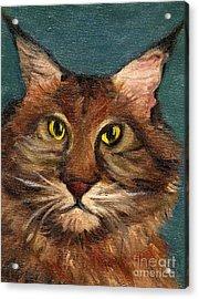 Mainecoon The Cat Acrylic Print by Kostas Koutsoukanidis