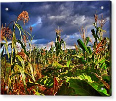 Maiz Acrylic Print by Skip Hunt