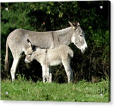 Mama Donkey And Baby Acrylic Print by Deborah  Smith