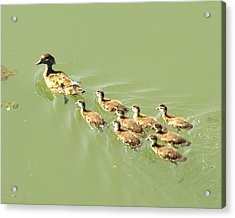 Mama Duck And Ducklings Acrylic Print by James Granberry