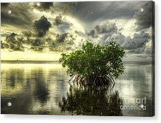 Mangroves I Acrylic Print by Bruce Bain