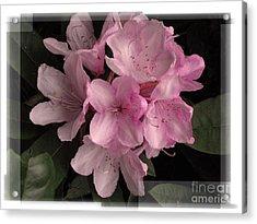 Many Splendored Blooms Acrylic Print by Judee Stalmack