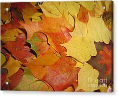 Maple Rainbow Acrylic Print by Ausra Huntington nee Paulauskaite