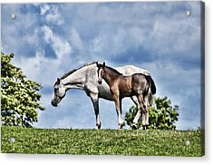 Mare And Foal Acrylic Print by Steve Purnell