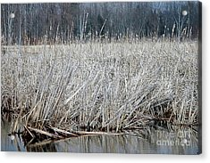 Marsh Land Acrylic Print by Kathleen Struckle