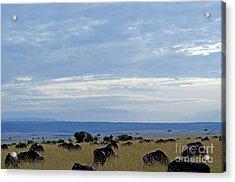 Masai Mara Acrylic Print by Pravine Chester