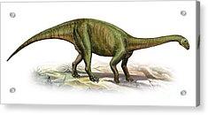 Massospondylus Carinatus, A Prehistoric Acrylic Print by Sergey Krasovskiy