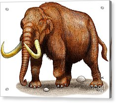 Mastodon Acrylic Print by Roger Hall and Photo Researchers