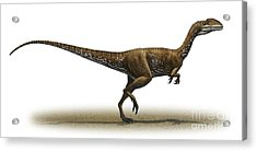 Megapnosaurus Kayentakatae Acrylic Print by Sergey Krasovskiy