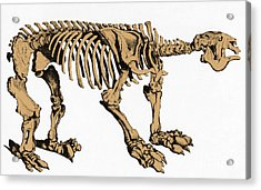 Megatherium, Extinct Ground Sloth Acrylic Print by Science Source