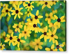 Melody Of Yellow Acrylic Print by Darren Fisher