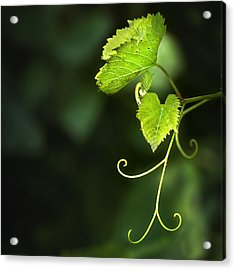 Memories Of Green Acrylic Print by Evelina Kremsdorf