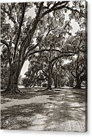 Memory Lane Monochrome Acrylic Print by Steve Harrington