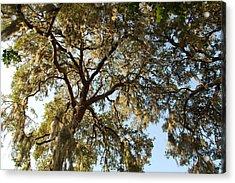 Mesmerizing Acrylic Print by Aimee L Maher Photography and Art Visit ALMGallerydotcom
