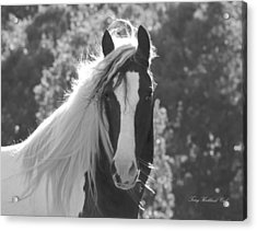 Mesmerizing Eyes Acrylic Print by Terry Kirkland Cook