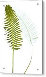 Mexican Cycad Leaf Mexico Acrylic Print by Piotr Naskrecki