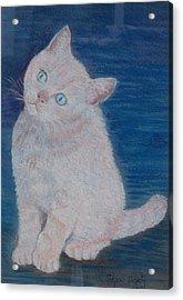 Miaow Acrylic Print by Noreen Hegarty