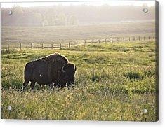 Michigan Buffalo Acrylic Print by Joe Gee