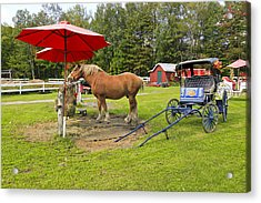 Midday Snack Acrylic Print by James Steele