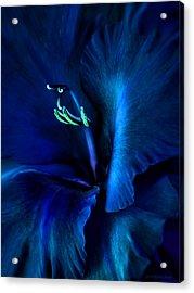 Midnight Blue Gladiola Flower Acrylic Print by Jennie Marie Schell