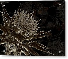 Milk Thistle In Sepia Acrylic Print by Shirley Sirois